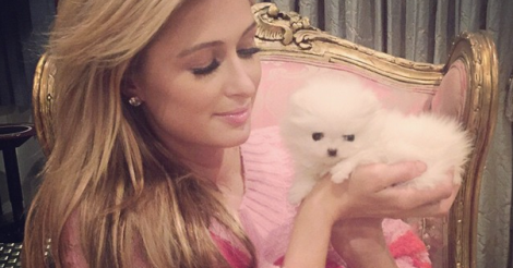 This is what a $13,000 dog looks like (Paris Hilton just bought two)