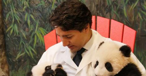 Justin Trudeau poses with baby pandas, proves he's the coolest Prime Minister ever [PHOTOS]