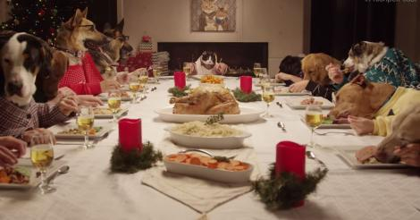 Freshpet Holiday Feast featuring 13 Dogs and 1 Cat Eating together is the best Christmas themed video of the year?