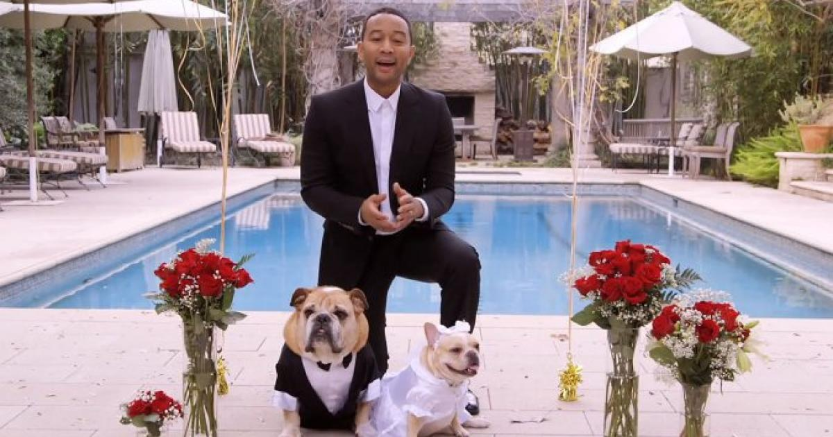 John Legend officiates his dogs' wedding, offers fans the chance to win a private concert [VIDEO]