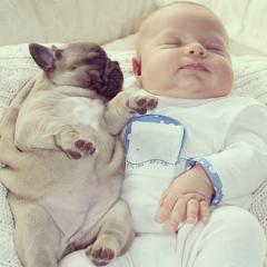 One baby and three French bulldogs take the Internet by storm - obviously! 27559